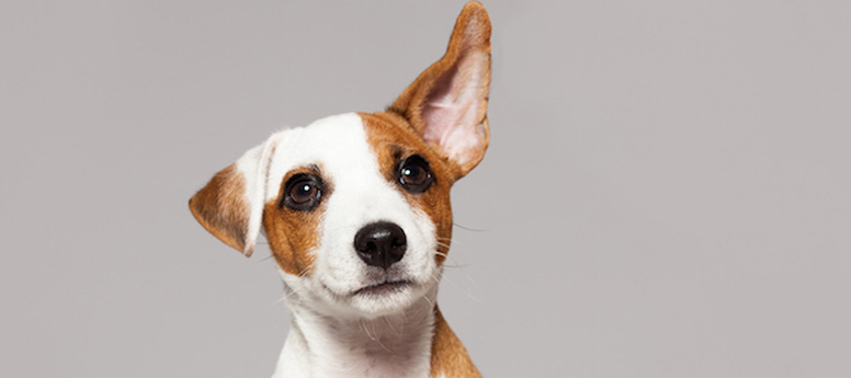 What did the dog hear? Anecdotal evidence is not the same as real feedback.