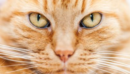People are as lazy as cats, which is why you need to make communication easy