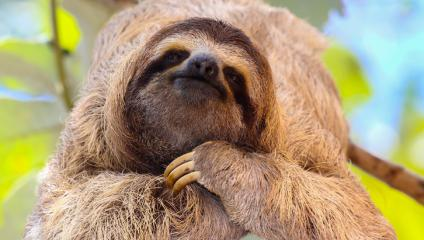 Sloth how bad presentations are like bad reality show