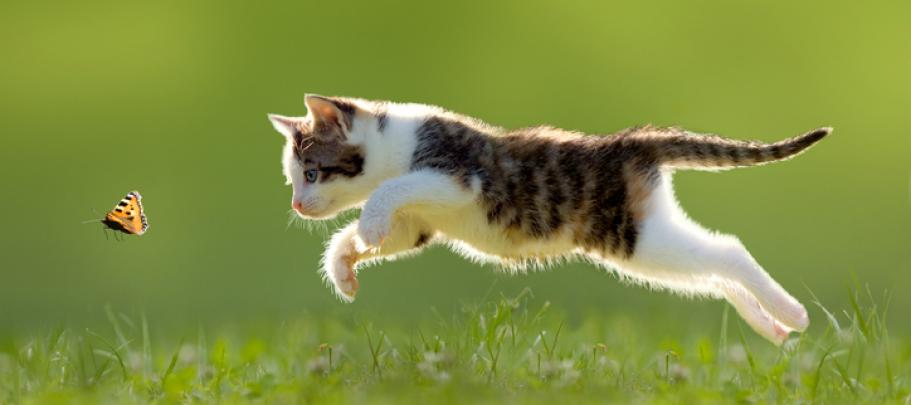 Just as a cat leaps chasing a butterfly, you can boost internal communication