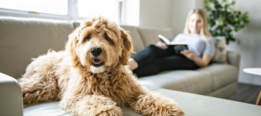 Learn how house training a new puppy can help you get employees engaged in change